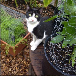 Garden kitty, protector of compost