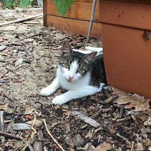 volunteer-page-_-cat-team