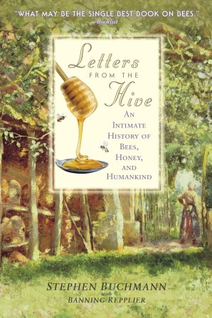Letters from the Hive